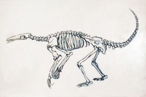 Giant Anteater Skeleton by Everruler