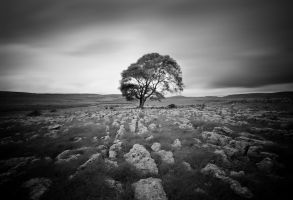 Lone-Tree - Malham by RyanMichael