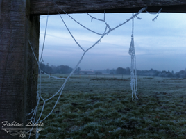 Spider web by TcnBiob