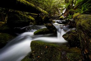 Mt. Field National Park X by MichaelG85