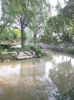 Pond in the park by Laura-in-china