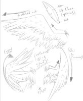 Feathered Wing Study by Amethyndria