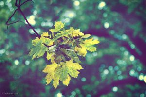 bokeh leaves by Isselinai