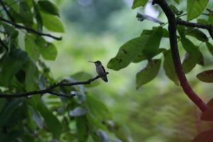 Little Hummer too by Dellessanna
