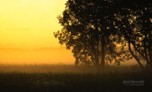 Foggy Summer Evening by JoniNiemela