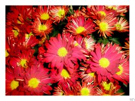 Flowers by Ra-fael