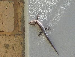 Lizard at our wall by Roses-and-Feathers