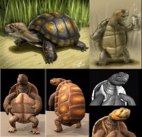 turtle - design and 3d by fernandofaria