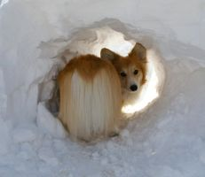 Exploring the Snow Cave by AstaraCheetah