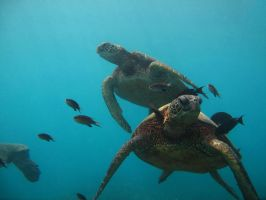 Dancing with the Sea Turtles by X5-442