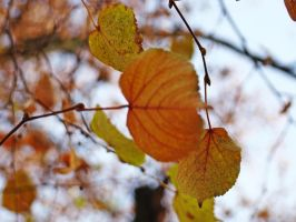 autumn.. by dancewithsky23