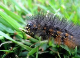 Woolly Worm by Nihongo86
