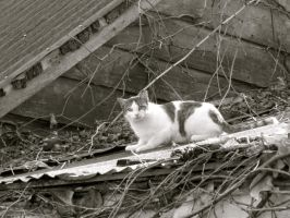 cat on a hot tin roof by DramaQueenB