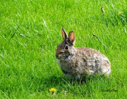 Wild Bunny by SparklersOasis