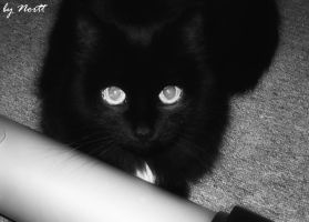 my godmother's sister's cat :3 by Verdallehn