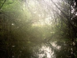 Forest river 4 by geverto