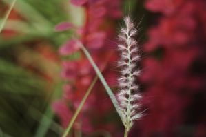 It's almost Autumn. by Winstein