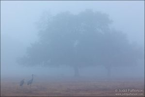 Cranes in the Fog by juddpatterson