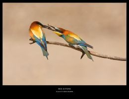 Bee Eaters II by ClaudeG
