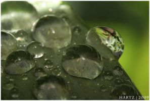 Drops III by sharting
