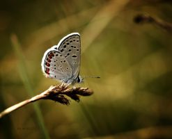 butterfly by life-flashes