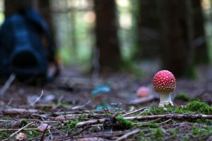 Forest'beauty by lawra