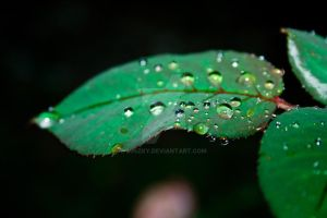 Leaf in the rain by miszky