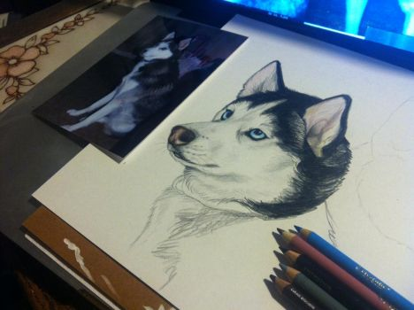 Husky WIP Commission by NatsumeWolf