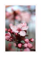 Pink Flower by pinkland