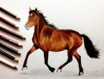 Colored pencils drawing of a Horse by JasminaSusak