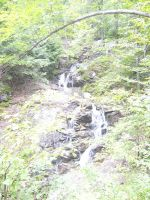 Waterfall in a calm forest by Riverd-Stock