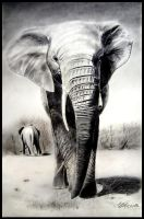 African elephant by sepultur60