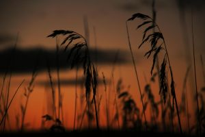 Among the reeds by Otium-terrae