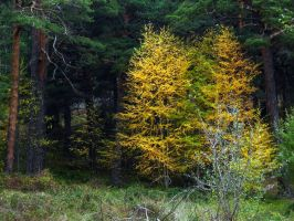 Autumn in montain by anakinpedro