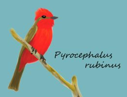 Vermilion Flycatcher by dareiqsan