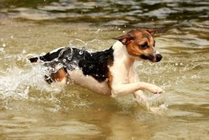 dog in water by imtl