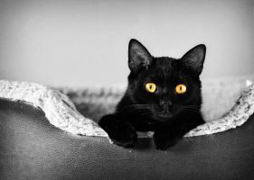 Yellow Eyes by KattFloka