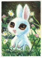 Bunny In The Meadow by charlesartist