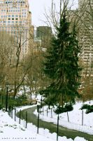 Tree and Trail in Central Park by blueink-ac