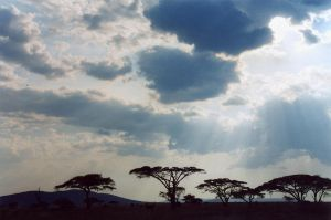 Serengeti and clouds by ernungo