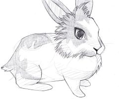 My rabbit : Fricassee by haborym02