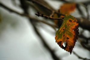 alone in autumn IV by Lk-Photography