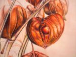 Chinese Lantern Detail by JuneBelle