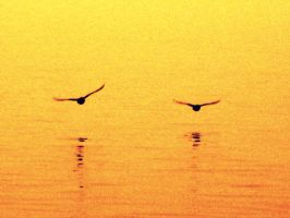 Birds over West Lake by Madelei