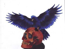 Raven on Skull by Lucky-Cat-Tattoo