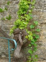 old grape vine by ingeline-art