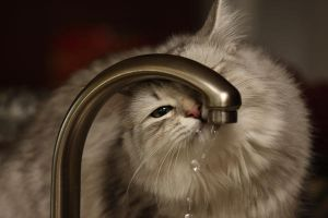 Sasha and Faucet no. 12 by Mischi3vo