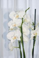 White flowers - 4 by creatief2