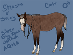 Shasta x Shay colt for BearsDen-Kennels by FallbrookeEC