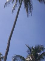 Palms Of The Carribean. by brittanyross16
